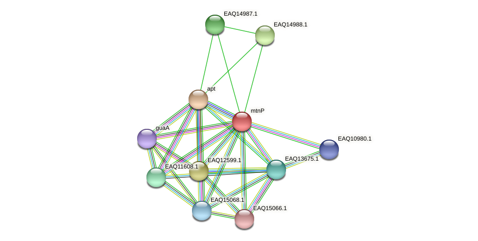 RB2654_20438 protein (Maritimibacter alkaliphilus) - STRING interaction network