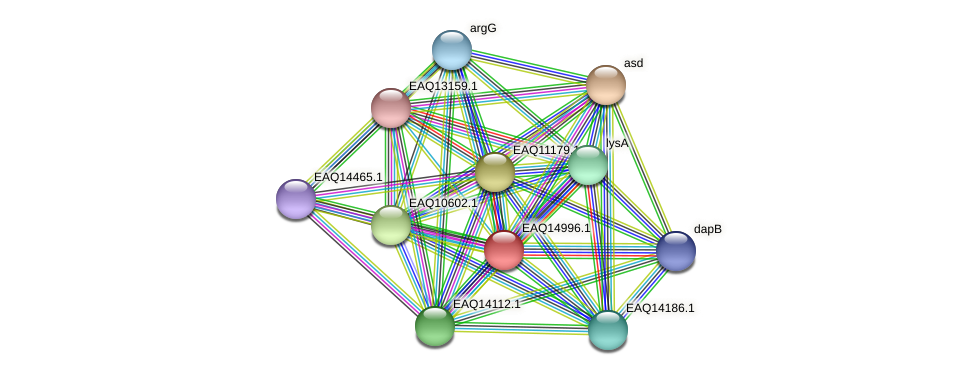 RB2654_20473 protein (Maritimibacter alkaliphilus) - STRING interaction network