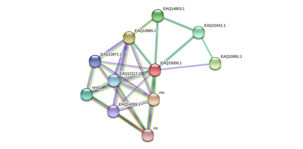 RB2654_20493 protein (Maritimibacter alkaliphilus) - STRING interaction network