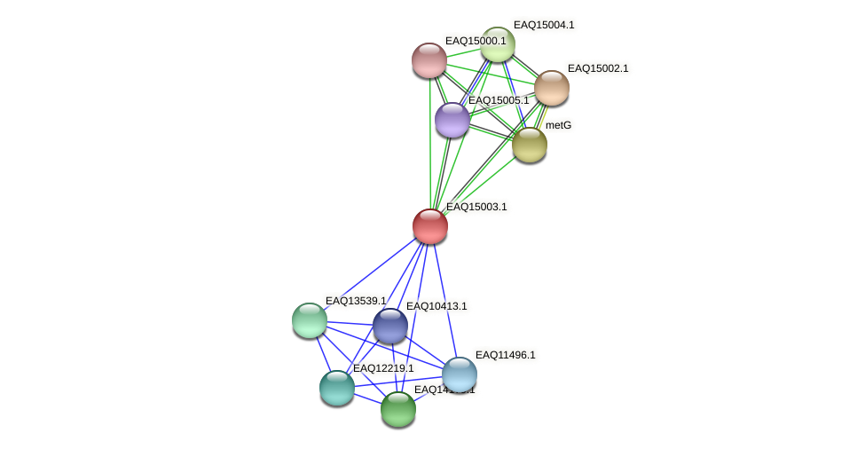RB2654_20508 protein (Maritimibacter alkaliphilus) - STRING interaction network