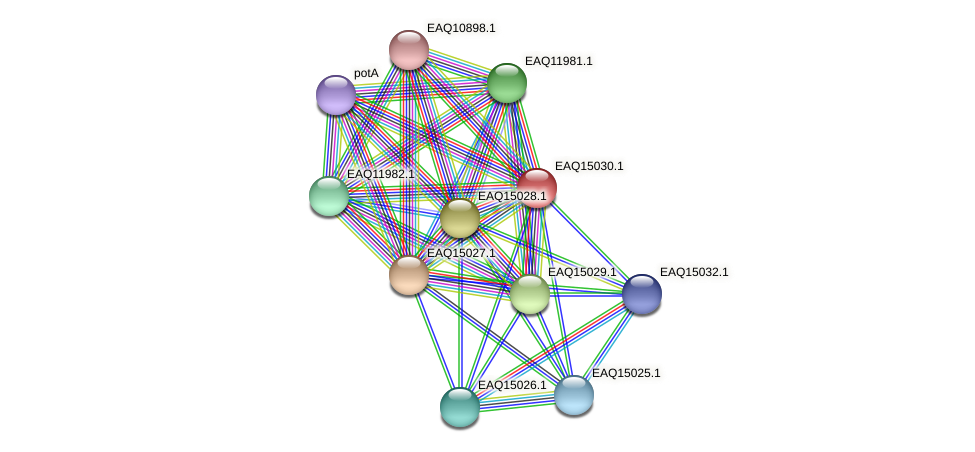 RB2654_20643 protein (Maritimibacter alkaliphilus) - STRING interaction network