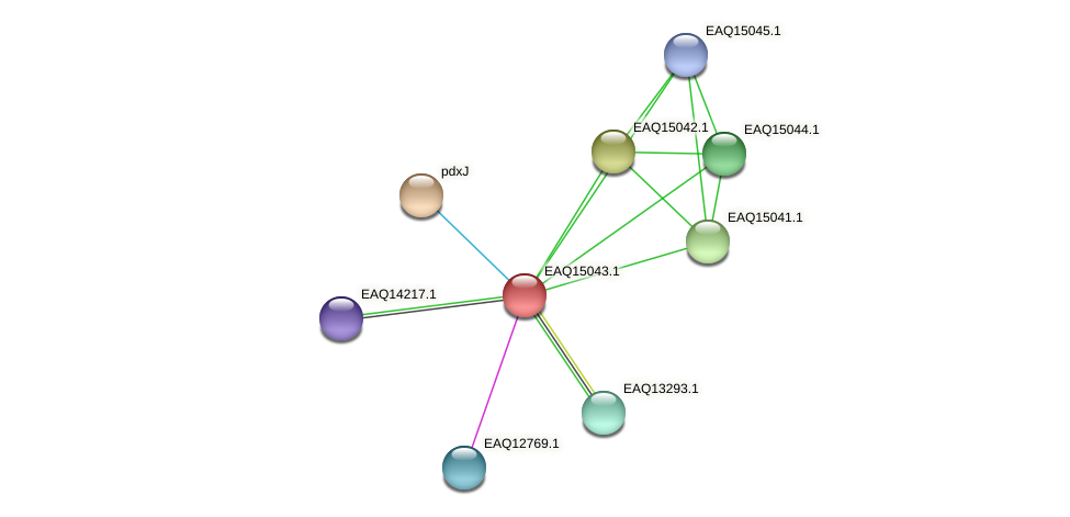 RB2654_20708 protein (Maritimibacter alkaliphilus) - STRING interaction network