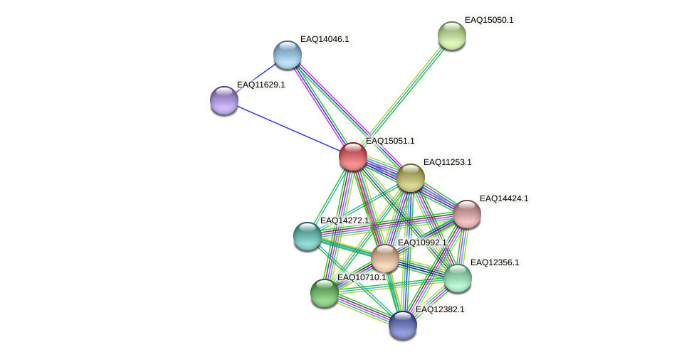 RB2654_20748 protein (Maritimibacter alkaliphilus) - STRING interaction network