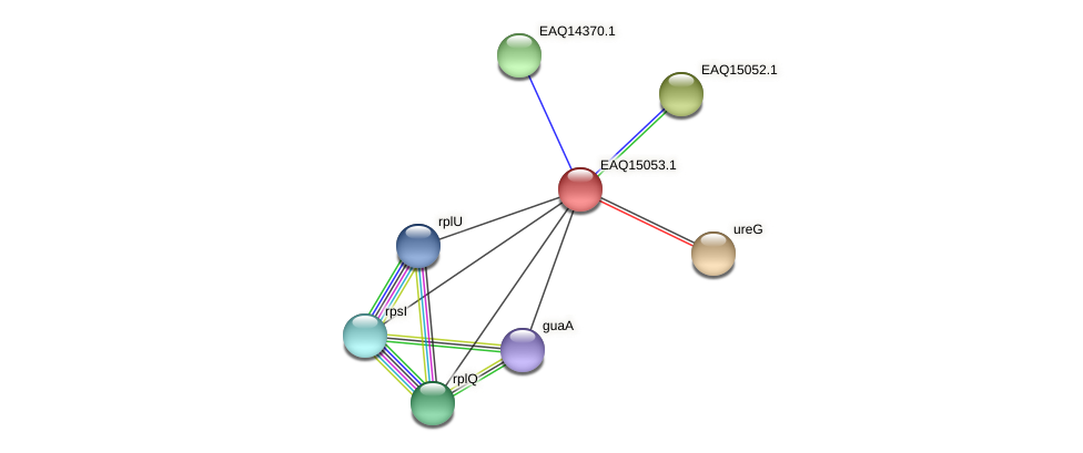 RB2654_20758 protein (Maritimibacter alkaliphilus) - STRING interaction network