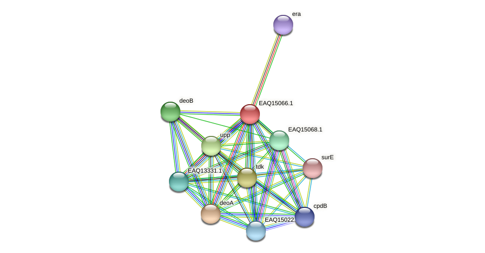 RB2654_20823 protein (Maritimibacter alkaliphilus) - STRING interaction network