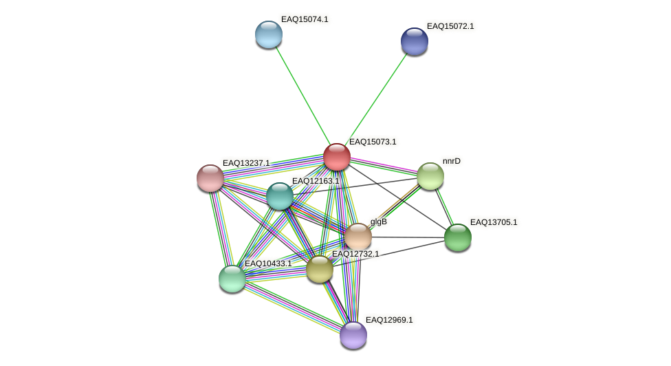 RB2654_20858 protein (Maritimibacter alkaliphilus) - STRING interaction network
