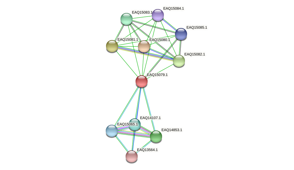 RB2654_20888 protein (Maritimibacter alkaliphilus) - STRING interaction network