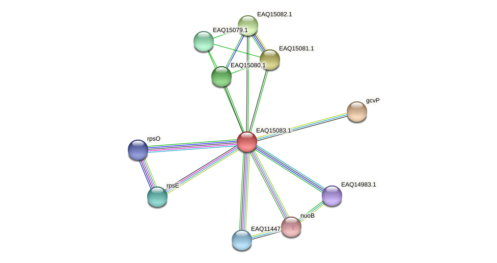 RB2654_20908 protein (Maritimibacter alkaliphilus) - STRING interaction network