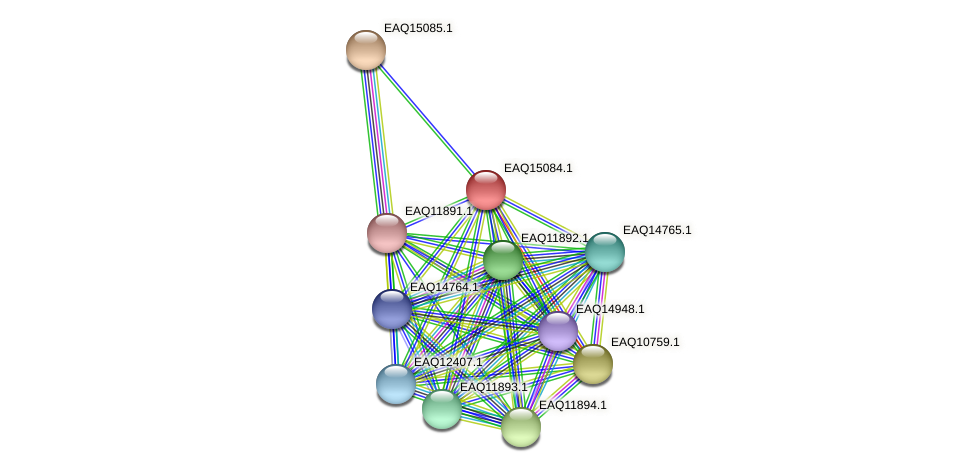 RB2654_20913 protein (Maritimibacter alkaliphilus) - STRING interaction network