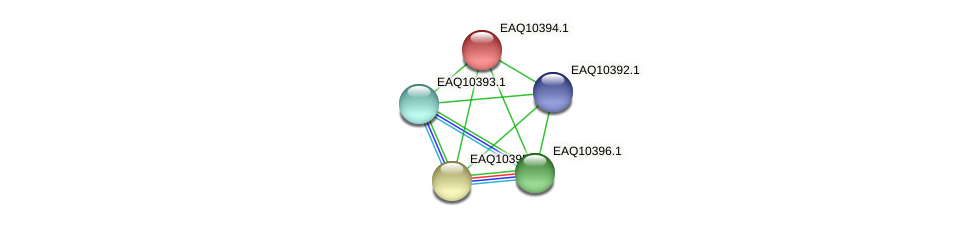 RB2654_21008 protein (Maritimibacter alkaliphilus) - STRING interaction network