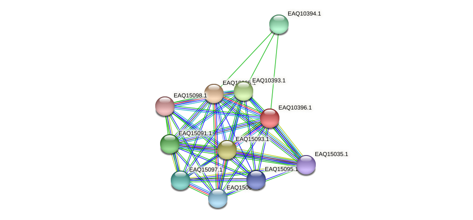 RB2654_21018 protein (Maritimibacter alkaliphilus) - STRING interaction network