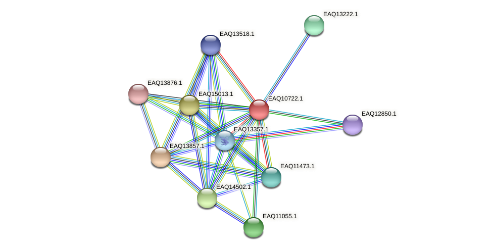 RB2654_21033 protein (Maritimibacter alkaliphilus) - STRING interaction network