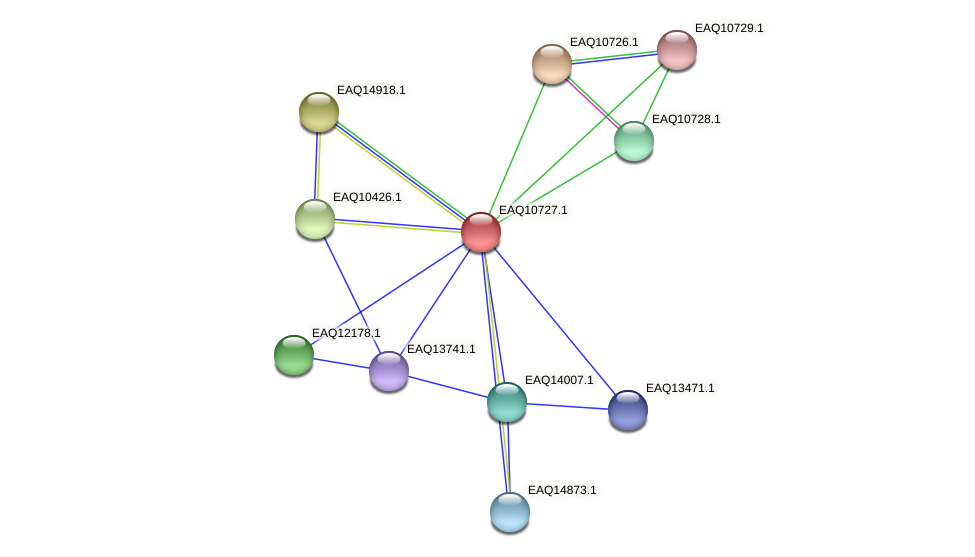 RB2654_21058 protein (Maritimibacter alkaliphilus) - STRING interaction network