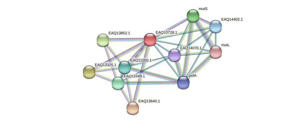 RB2654_21063 protein (Maritimibacter alkaliphilus) - STRING interaction network