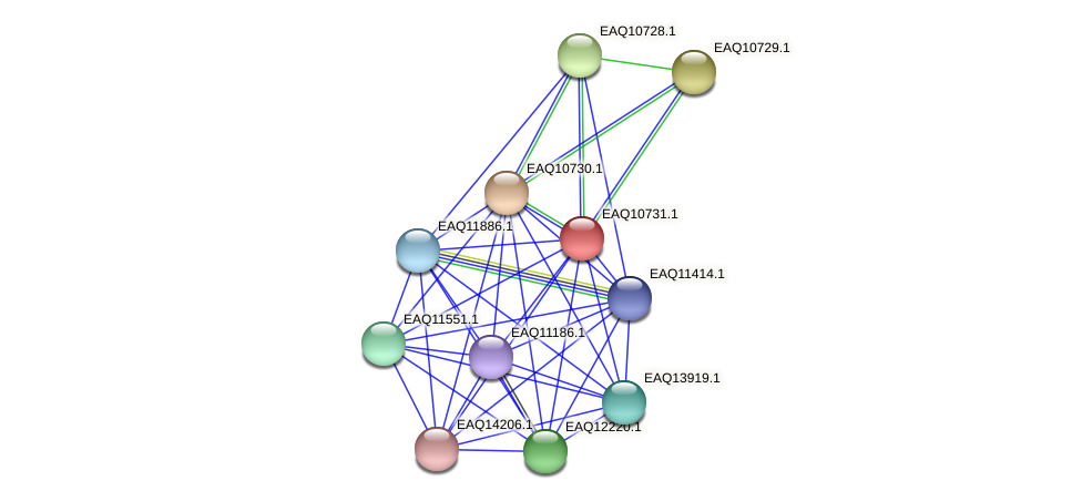 RB2654_21078 protein (Maritimibacter alkaliphilus) - STRING interaction network