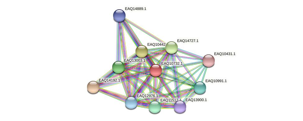 RB2654_21083 protein (Maritimibacter alkaliphilus) - STRING interaction network
