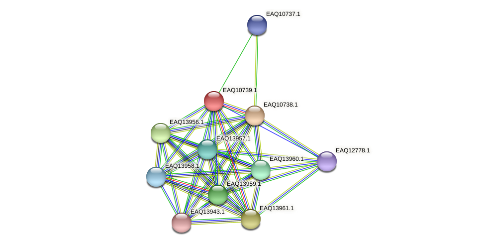 RB2654_21118 protein (Maritimibacter alkaliphilus) - STRING interaction network