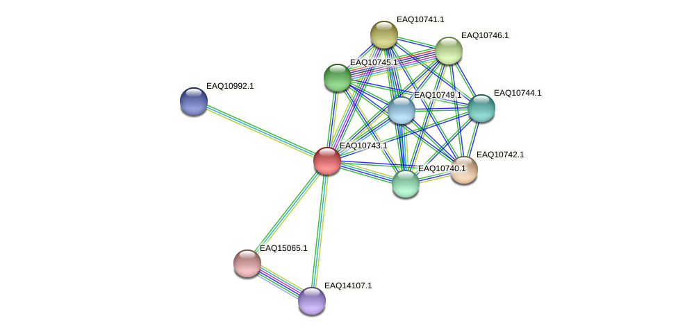 RB2654_21138 protein (Maritimibacter alkaliphilus) - STRING interaction network