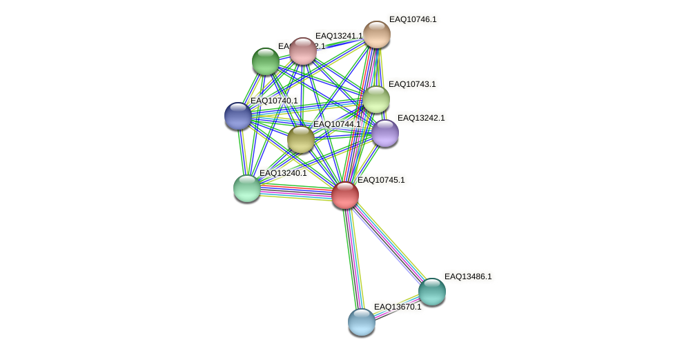 RB2654_21148 protein (Maritimibacter alkaliphilus) - STRING interaction network