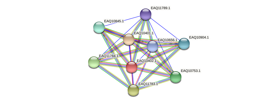 RB2654_21198 protein (Maritimibacter alkaliphilus) - STRING interaction network