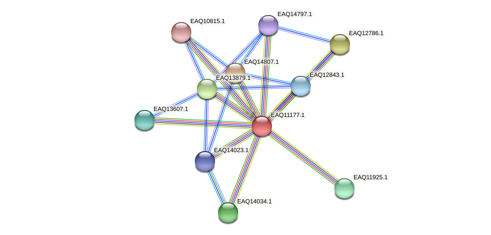 RB2654_21293 protein (Maritimibacter alkaliphilus) - STRING interaction network