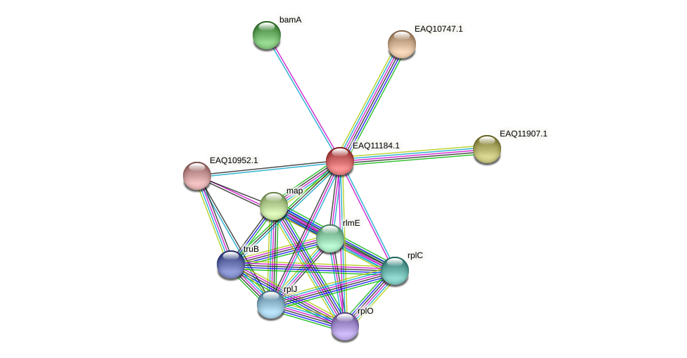 RB2654_21328 protein (Maritimibacter alkaliphilus) - STRING interaction network
