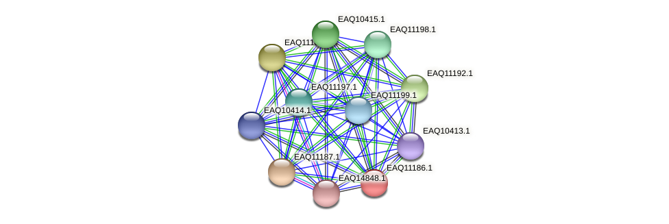 RB2654_21338 protein (Maritimibacter alkaliphilus) - STRING interaction network