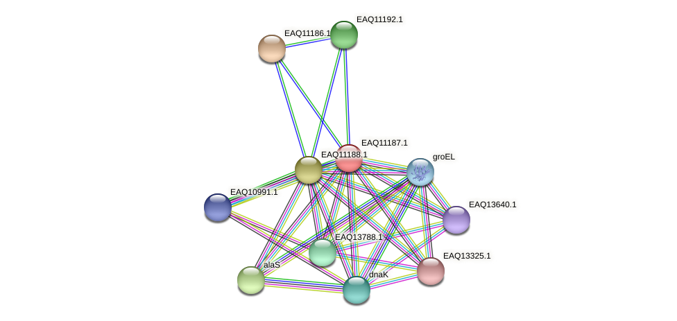 RB2654_21343 protein (Maritimibacter alkaliphilus) - STRING interaction network