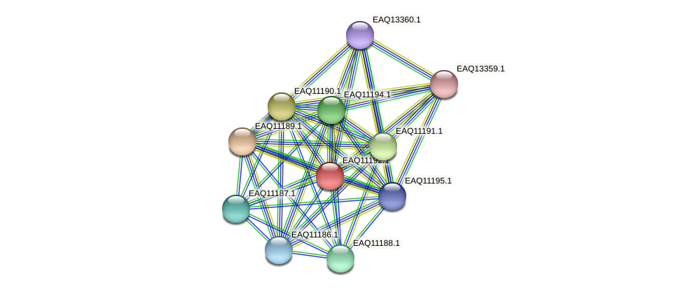 RB2654_21368 protein (Maritimibacter alkaliphilus) - STRING interaction network