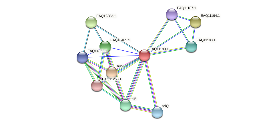 RB2654_21373 protein (Maritimibacter alkaliphilus) - STRING interaction network