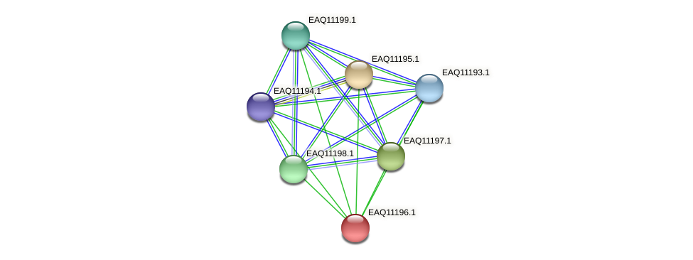 RB2654_21388 protein (Maritimibacter alkaliphilus) - STRING interaction network