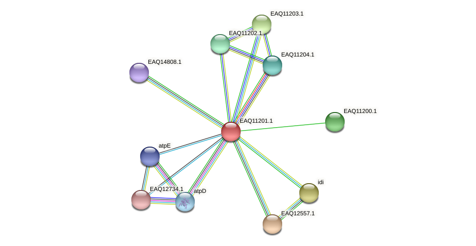 RB2654_21413 protein (Maritimibacter alkaliphilus) - STRING interaction network