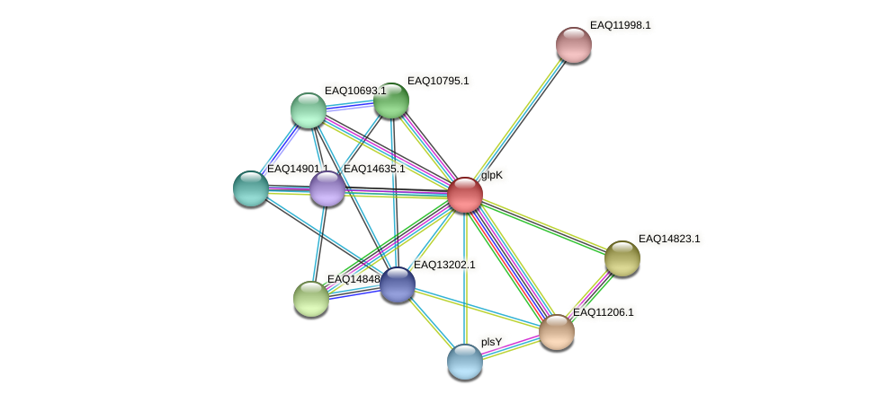 glpK protein (Maritimibacter alkaliphilus) - STRING interaction network