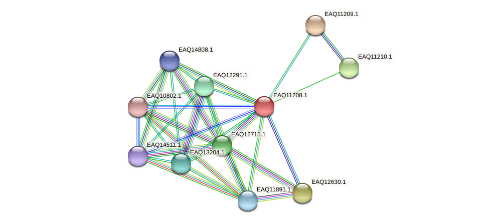 RB2654_21448 protein (Maritimibacter alkaliphilus) - STRING interaction network