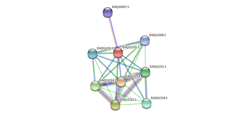 RB2654_21483 protein (Maritimibacter alkaliphilus) - STRING interaction network