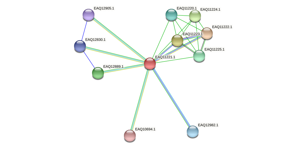 RB2654_21513 protein (Maritimibacter alkaliphilus) - STRING interaction network