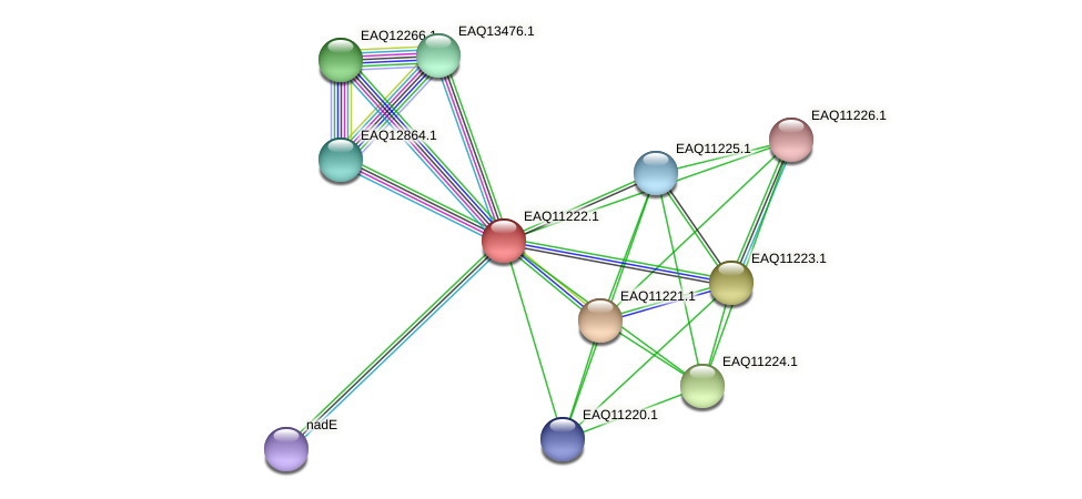 RB2654_21518 protein (Maritimibacter alkaliphilus) - STRING interaction network