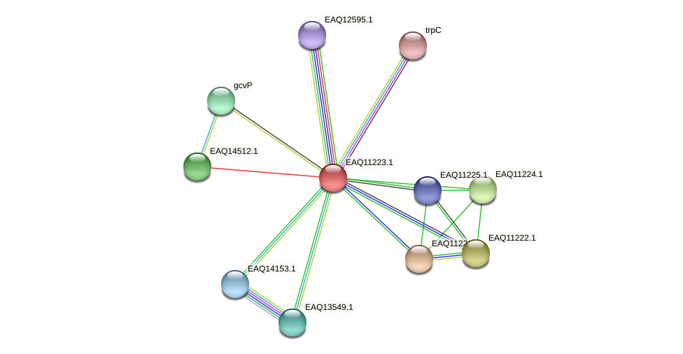 RB2654_21523 protein (Maritimibacter alkaliphilus) - STRING interaction network