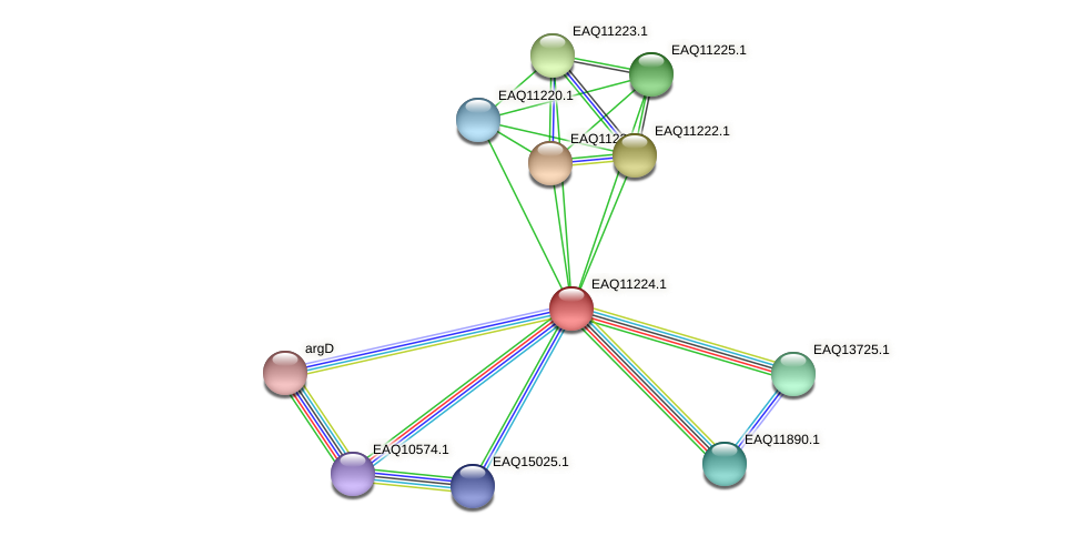 RB2654_21528 protein (Maritimibacter alkaliphilus) - STRING interaction network