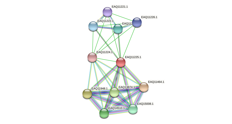 RB2654_21533 protein (Maritimibacter alkaliphilus) - STRING interaction network