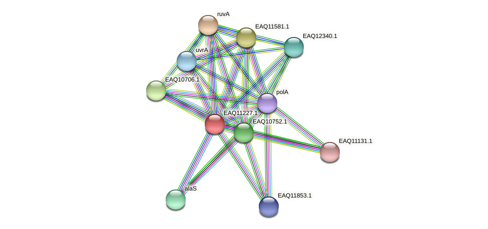 RB2654_21543 protein (Maritimibacter alkaliphilus) - STRING interaction network