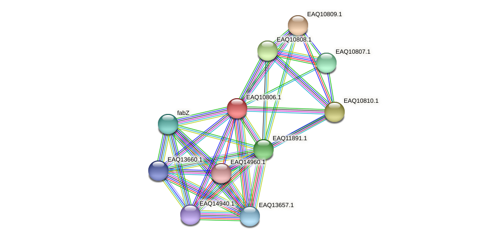 RB2654_21598 protein (Maritimibacter alkaliphilus) - STRING interaction network