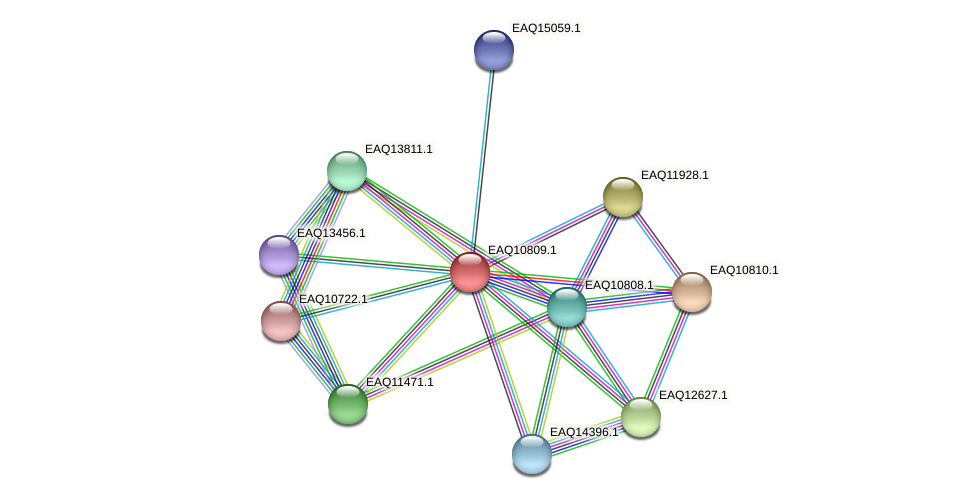 RB2654_21613 protein (Maritimibacter alkaliphilus) - STRING interaction network