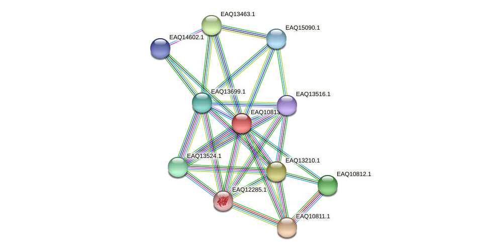 RB2654_21633 protein (Maritimibacter alkaliphilus) - STRING interaction network
