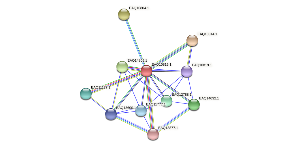 RB2654_21643 protein (Maritimibacter alkaliphilus) - STRING interaction network