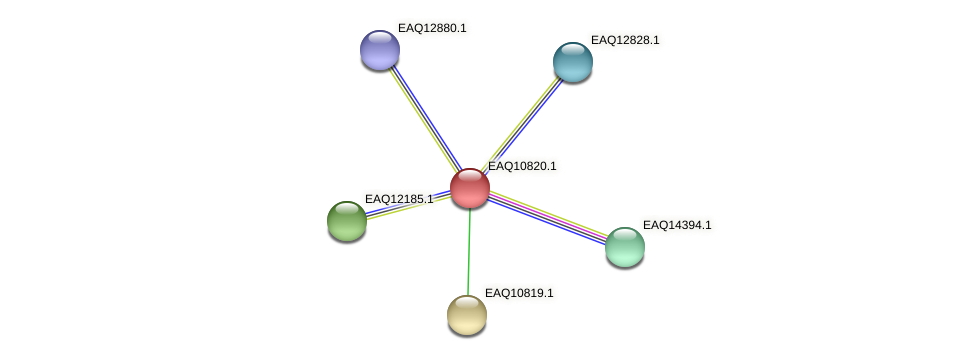RB2654_21668 protein (Maritimibacter alkaliphilus) - STRING interaction network