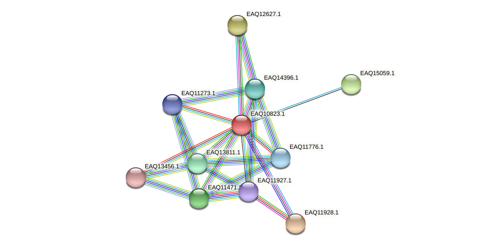 RB2654_21683 protein (Maritimibacter alkaliphilus) - STRING interaction network