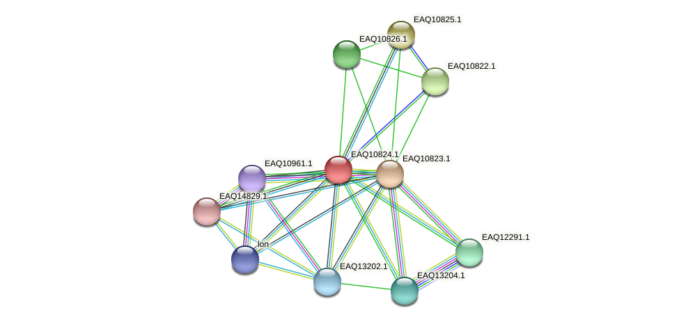 RB2654_21688 protein (Maritimibacter alkaliphilus) - STRING interaction network