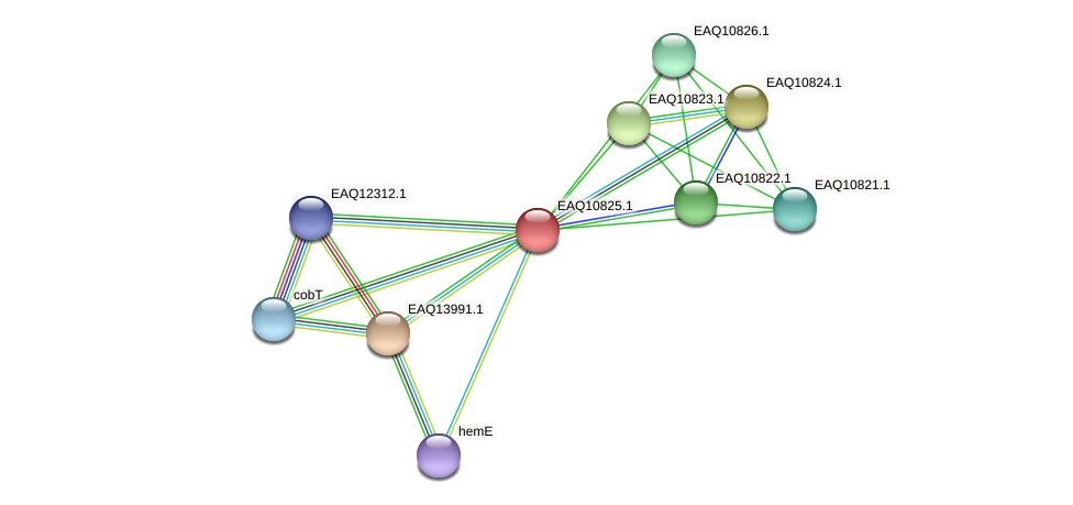 RB2654_21693 protein (Maritimibacter alkaliphilus) - STRING interaction network