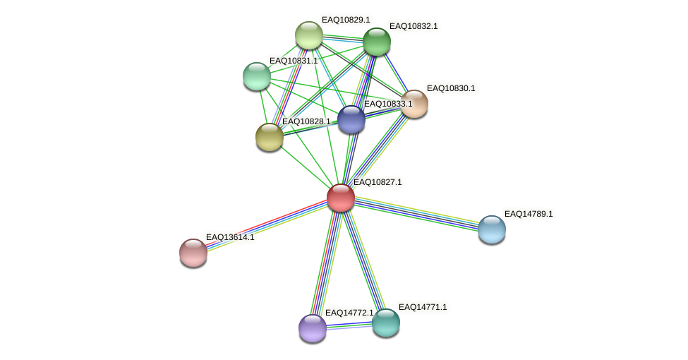 RB2654_21703 protein (Maritimibacter alkaliphilus) - STRING interaction network